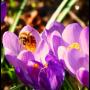 """03.05.2020 – Frühlingsmarkt auf """"Gut Basthorst"""""""