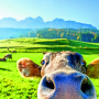 16.05. bis 23.05.2020 – Südtirol